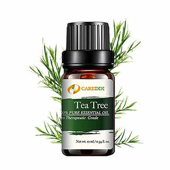 Aromatherapy Tea Tree Essential Oil Supercritical Co2 Extraction